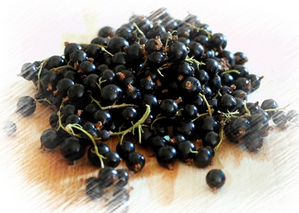 Fekete ribizli, a gyümölcs képe