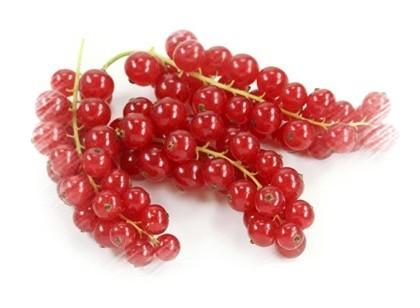Piros ribizli, a gyümölcs képe