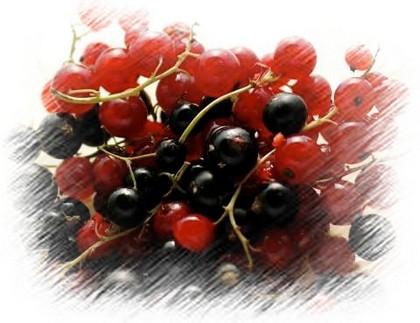 Vegyes ribizli, a gyümölcs képe