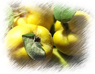 Birs, a gyümölcs képe