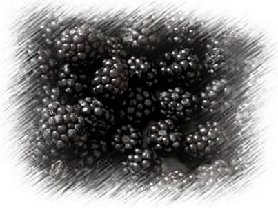 Szeder, a gyümölcs képe