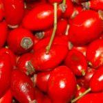 Csipkebogyó szörp – 3kg